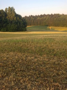 Zone du partage entre Pfettershofen (Pilsach) et Trautmannshofen (